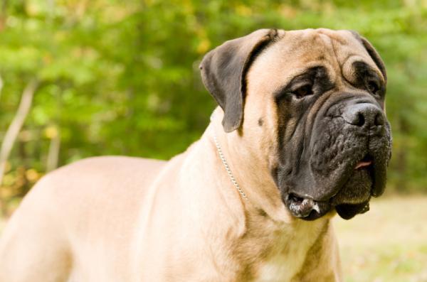 Krmivo má vliv na změnu psího mozku